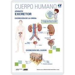 Aparell excretor