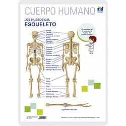 Els ossos de l'esquelet