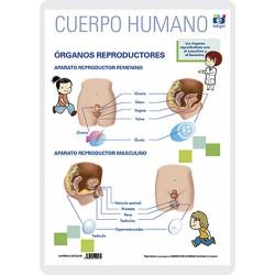 Órganos reproductores