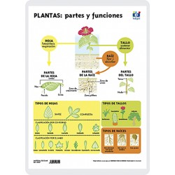 Plants: parts and functions