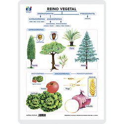 Vegetal kingdom