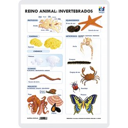 Regne animal: Invertebrats