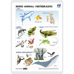 Regne animal: Vertebrats