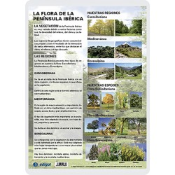 The Iberian flora