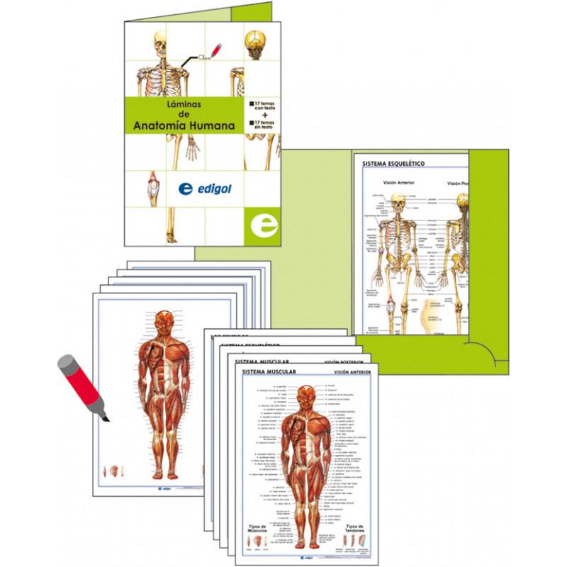 Anatomía - Carpeta y fichas de anatomía