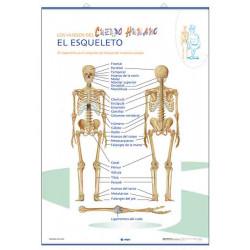 Anatomía - El Esqueleto / Las Partes del Cuerpo Humano