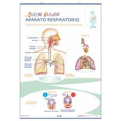 Anatomía - Aparato Respiratorio / Aparato Circulatorio
