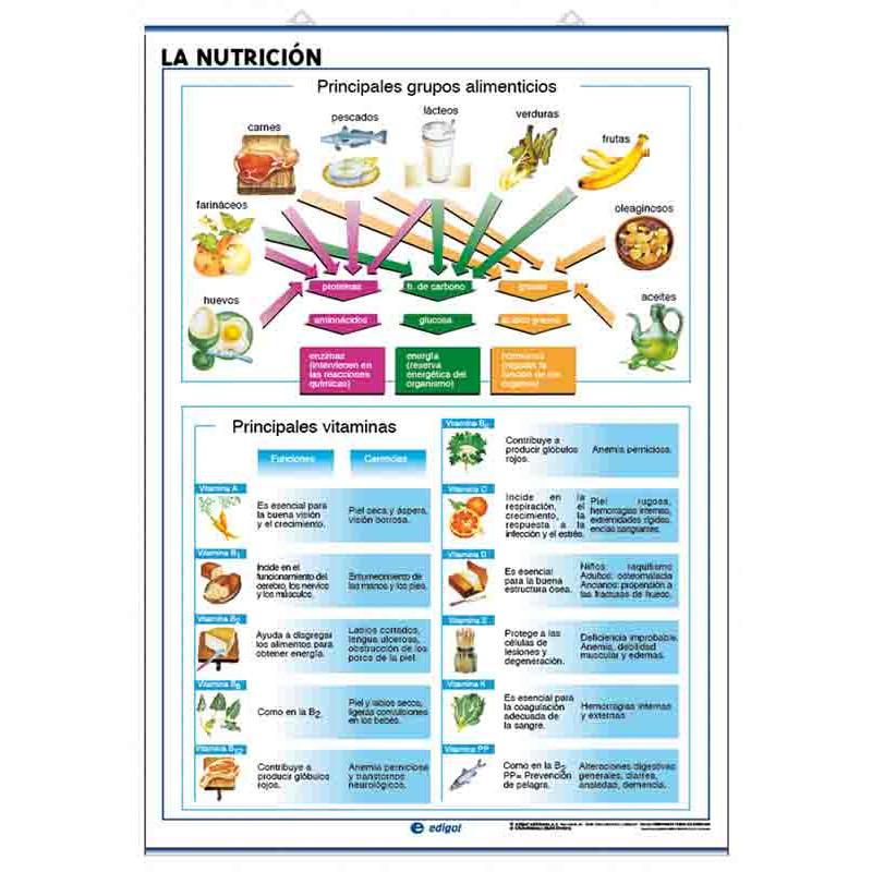 Anatomía - La Nutrición / El Cuerpo Humano