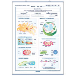 Ciencias - Reino Monera / Reino Protista
