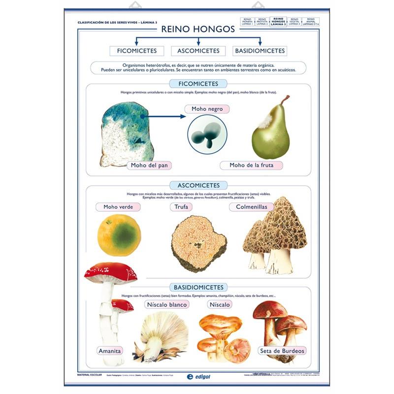 Ciencias - Reino vegetal / Reino Hongos