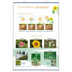 Ciencias - Crecimiento / Clasificación de Las plantas
