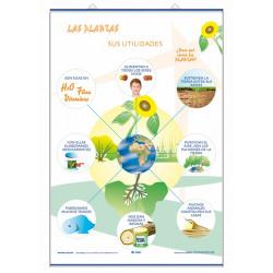 Ciencias - Los frutos / Las plantas y sus utilidades