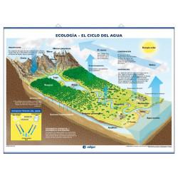 Ciencias - El Sistema Solar / El Ciclo del Agua